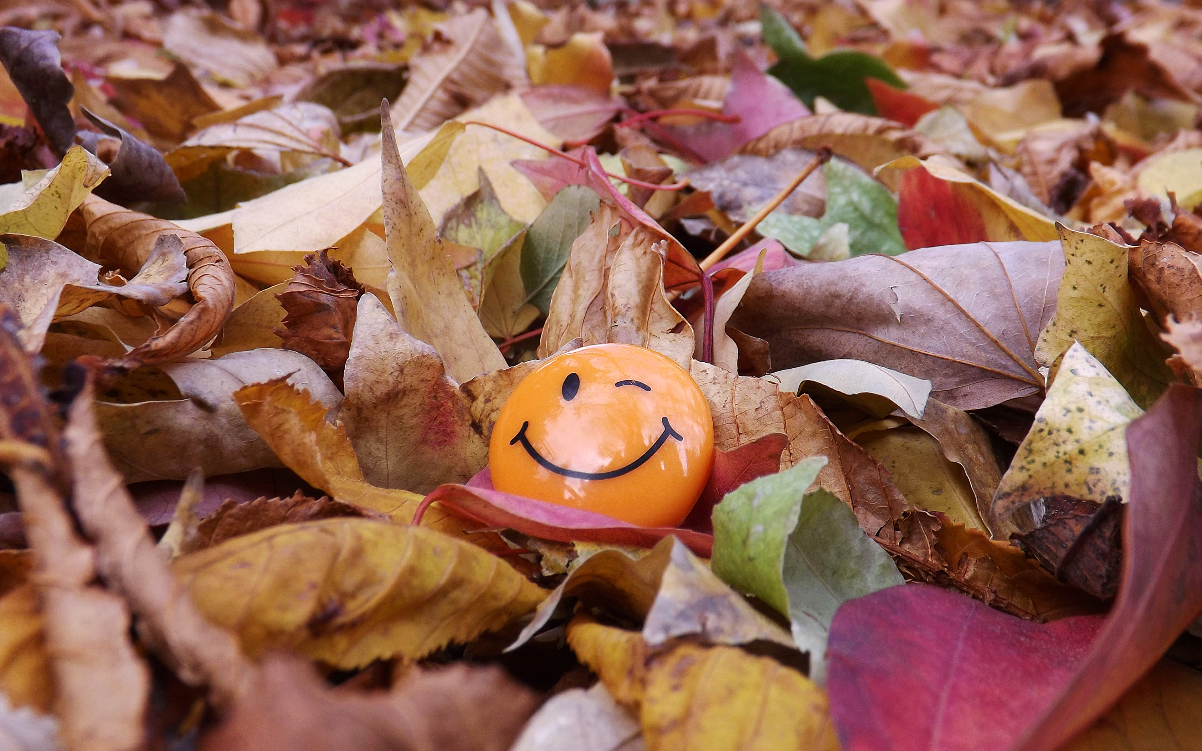Прикольные стихи про октябрь и осень